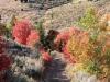 18-Bear-Lake-Fall-leaves