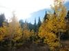 19-Logan-Canyon-Fall-leaves