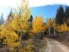 20-Logan-Canyon-Fall-leaves